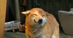 Image result for smiling dog