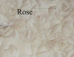 Tutorial for making large paper roses, part of a paper flower backdrop project for The Secret Garden baby shower.
