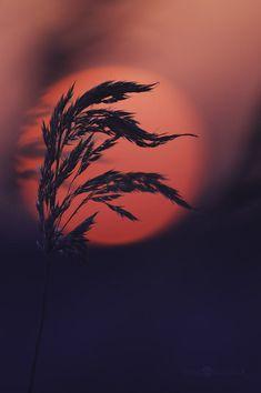 Sunset Reds   Joni Niemelä