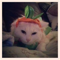 I don't like cats I love them!!!!!!!!!!!!!!!!!!!!!!!!!!!!