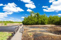 Kudy z nudy - Národní přírodní rezervace Soos - český Yellowstone nedaleko Františkových Lázní Rarity, Country Roads, Travel, Trips, Viajes, Destinations, Traveling