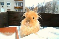 Rubi bunny, my bunny, snow
