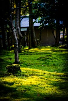 Moss temple garden  , Saiho-ji in Kyoto, Japan