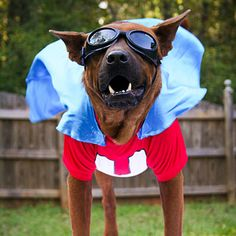 Underdog!! Great pet Halloween costumes