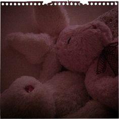 Morning light. Morning Light, Teddy Bear, Life, Animals, Animales, Animaux, Teddy Bears, Animal, Animais