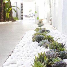 Hauswurzen und weiße Steine interessante Kombination   moderner Vorgarten