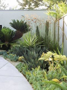 The Secrets of Low Maintenance Backyard Landscaping Designs Front Yards Revealed - casitaandmanor Low Water Landscaping, Small Front Yard Landscaping, Succulent Landscaping, Landscaping Tips, Garden Landscaping, Arizona Landscaping, Mailbox Landscaping, Country Landscaping, Landscaping Software