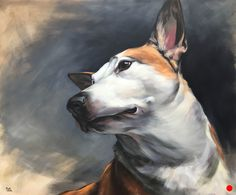 """""""Roo"""" (Mixed Breed) 