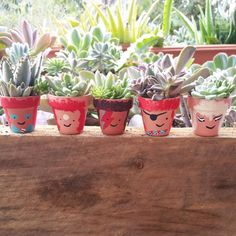 ⚡ #succulent #succulentlove #succulentlover #succulove #succulenthoarder #succulentobsession #succulentobsessed #succulentporn #succulentfreak #succulenthoarder #davidbowie #aladdinsane #thinwhiteduke #ziggy #ziggystardust #fms_homemade