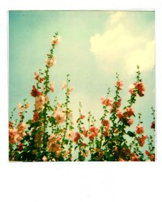 .summer <3