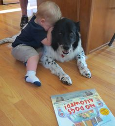 essays on pet animals for kids