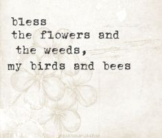 bless the birds the bees