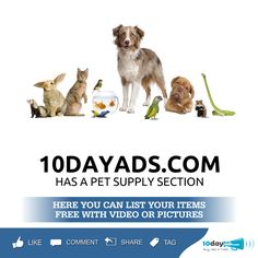 10dayads.com has a pet supply section. #Pet #ProductsForPet
