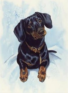 The 14 Nicest Dachshund Paintings Dachshund Funny, Arte Dachshund, Dachshund Love, Daschund, Dachshund Drawing, Cross Paintings, Dog Paintings, I Love Dogs, Cute Dogs