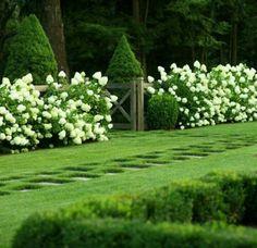 LOVE. white lilac bushes