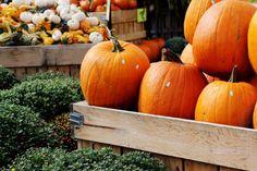 Autumn & Halloween Blog