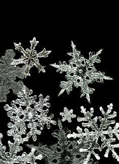 Digital Close Up of Snowflakes/Alamy