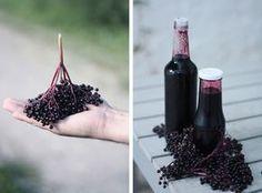Děvče u plotny - Sirup zplodů bezu černého Home Canning, Blackberry, Health And Beauty, Red Wine, Alcoholic Drinks, Food And Drink, Herbs, Homemade, Fruit