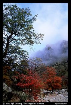 Picture/Photo: Autumn colors, wash, and clearing clouds, Pine Spring Canyon. Texas National Parks, American National Parks, Guadalupe Peak, Guadalupe Mountains National Park, Texas Travel, Picture Photo, Places To Go, Country Roads, United States