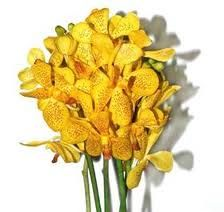 MOKARA ORCHIDS FROM HAWAII,  MUSTARD YELLOW IS MY FAVORITE COLOR!