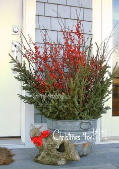 ChiPPy!-SHaBBy's! House *2013* Old Galvanized Bucket, Spruce Tip Branches, Winterberries, Vintage Garden F*O*X...