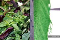 Darker in color and flavorful than iceberg lettuce, a good spring mix can include arugula, romaine, radicchio, spinach, endives, and wild greens. While it may seem as though you're munching on a handful of leaves, you're actually preventing several forms of cancer and stocking up on antioxidants.