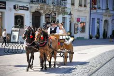 Jazda na koči po Košiciach - Vyletik.eu #atrakcie #zaujimavosti #slovensko #slovakia #cestovanie #travel #interest Horses, Animals, Animales, Animaux, Animal, Animais, Horse