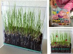 Growing Grass in a CD Case