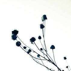 """Zen Grass 6C"" fine art print, 8x8"": Duealberi"