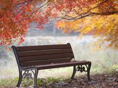 Lonely bench under the autumn tree Photographic Print by JongBeom Kim at AllPosters.com