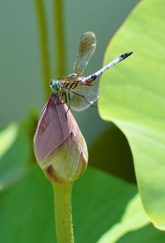 Love, love, love dragonflies...
