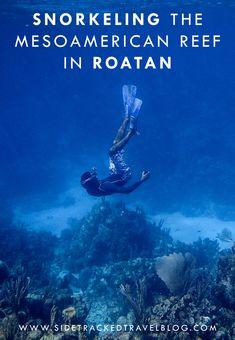 Snorkeling the Mesoamerican reef in Roatan, Honduras Utila, Best Snorkeling, Best Scuba Diving, Roatan, Underwater Photos, Underwater World, Alberta Canada, Belize, Uganda