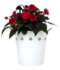 Red Impatiens in White Flower Bucket Sympathy Plants, Plants Online, Flower Delivery, White Flowers, Planting Flowers, Planter Pots, Bucket, Herbs, Green