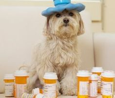 Remédio humano para cães. Saiba o que pode acontecer com seu cão se vc der determinado medicamento. Veja a lista dos remédios proibidos..