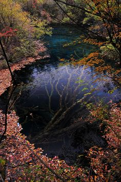 ~~woods ~ autumn water reflection, Jiuzhaigou, Sichuan, China by Melinda ^..^~~