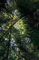 La compleja estructura y diversidad de la selva tropical ofrece a la humanidad enormes posibilidades de manejo sostenible de recursos y serv...