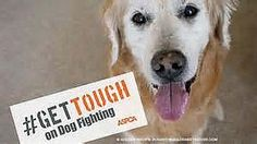 Sir Patrick Stewart Joins #GetTough campaign for National Dog Fighting Awareness Day [Blog Post]  Tell the Department of Justice (DoJ) that you want to see more federal dog fighting prosecutions.