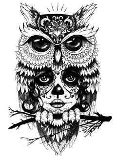 Owl illustration …