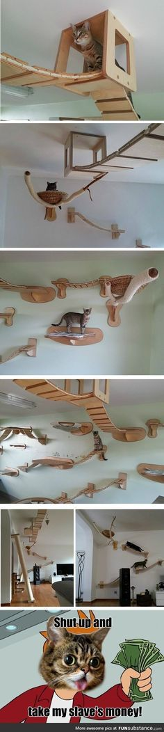 ceiling furniture means doesnt take up space on the floor, but then maybe you need high ceiling for it. plus not all owners will want cats jumping on them from up high