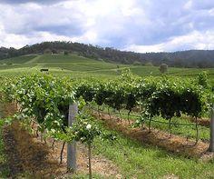 The top 5 wine regions in Australia http://www.aluxurytravelblog.com/2013/03/07/the-top-5-wine-regions-in-australia/
