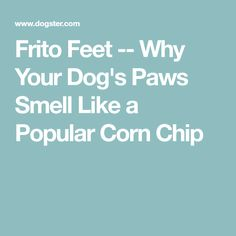 Frito Feet -- Why Your Dog's Paws Smell Like a Popular Corn Chip