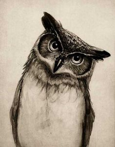 Realistic Owl Tattoo Drawing