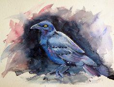 Cape Glossy Starling from Africa by kovacsannabrigitta on DeviantArt