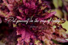""":) """"Put yourself in the way of beauty."""" - Cheryl Strayed"""