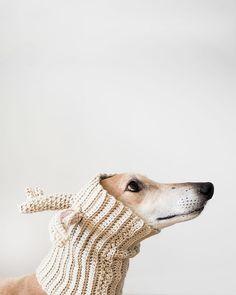 Greyhound Temptation Dog Photo Print Wall Art by AmyRothPhoto, $25.00