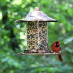 Perky-Pet Copper Panorama Bird Feeder 312C at The Home Depot - Mobile