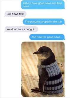 """30 Animal Memes & Pics Guaranteed To Improve Your Mood - Funny memes that """"GET IT"""" and want you to too. Get the latest funniest memes and keep up what is going on in the meme-o-sphere. Funny Shit, Funny Texts Jokes, Stupid Funny Memes, Haha Funny, Funny Cute, Funny Stuff, Funny Animals With Captions, Funny Pictures With Captions, Funny Animal Memes"""