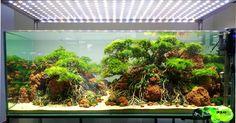 #Aquascape #Bonzai style , by Phân nền Topsoil.