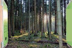 Ein Walderlebnis für die ganze Familie gibt es im Timberland Trail in Neuried.