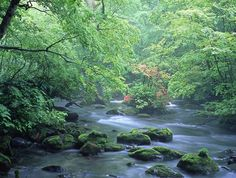 奥入瀬渓流写真1